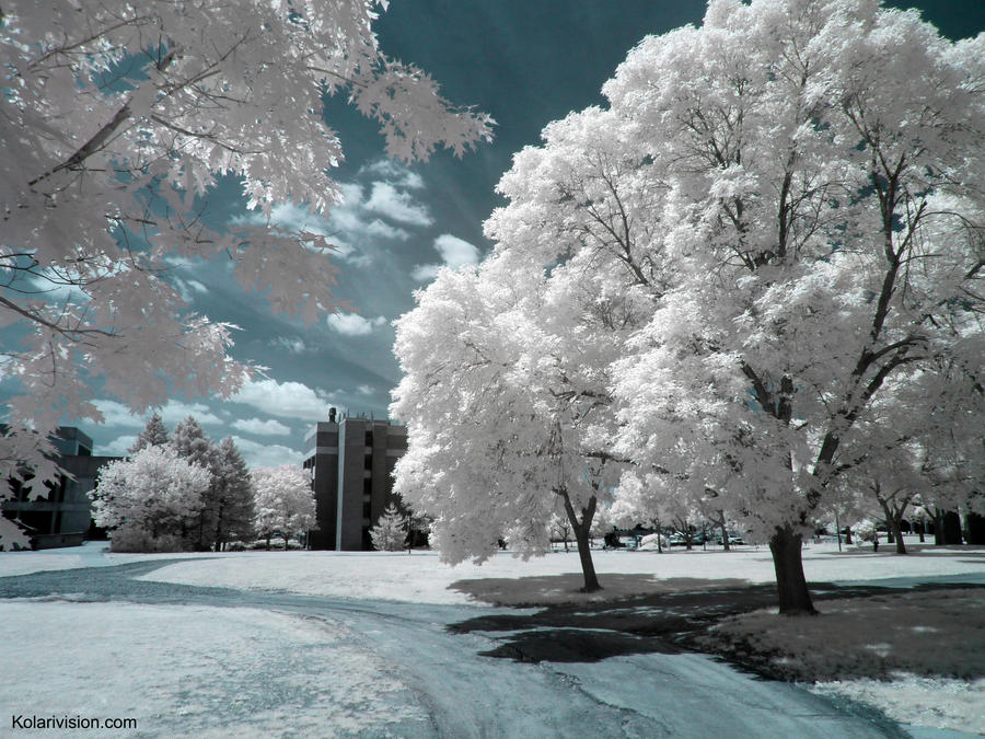 Dreams in Infrared by ilimel