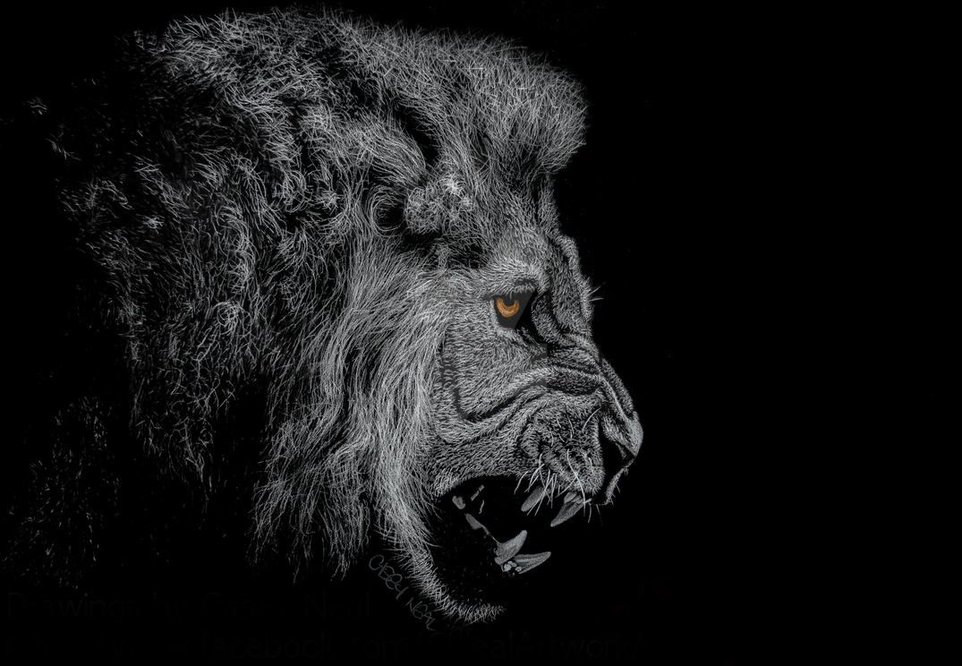 Lion Charcoal Drawing By CaseyNealArtwork