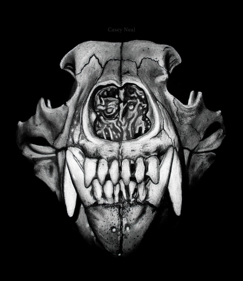 Bear Skull Drawing Grizzly Skull Charcoal...