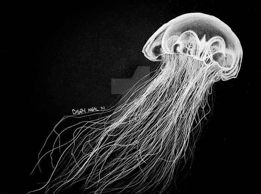 4f46cbcd866 Jellyfish Charcoal Drawing by CaseyNealArtwork on DeviantArt