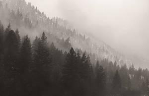 The Snowfall by CaseyNealArtwork