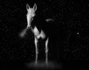 Horse in White Charcoal