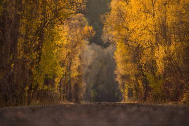 Autumn Landscape by CaseyNealArtwork