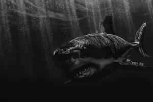 Charcoal Shark