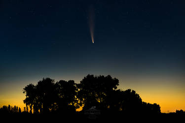 Comet Neowise and the Trees of Eagles