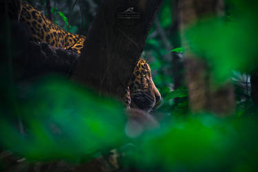 King of Costa Rica