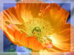 Wrinkled petals II