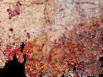 Stoplight Leaves Cutout PNG by RANicholl