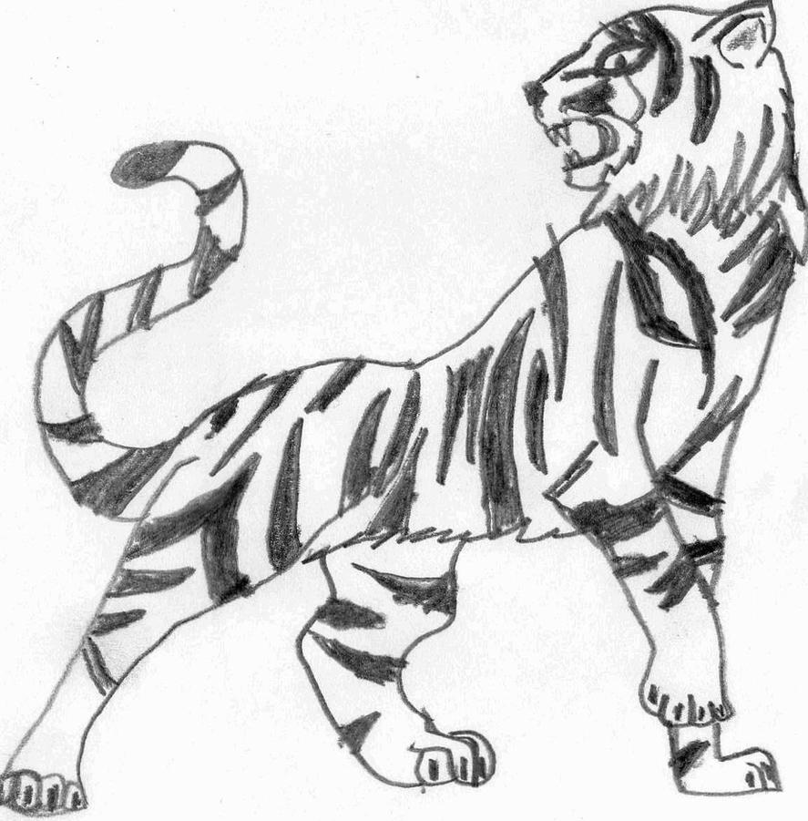 Tiger Line Drawing Easy : Tiger pencil art by ozzy on deviantart