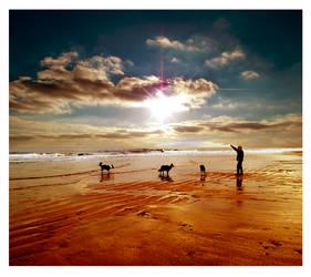 Sea dog's by FWHphoto