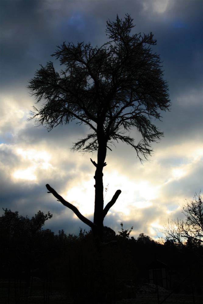 Baum in Eden by PPriest