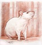 A Rat Portrait