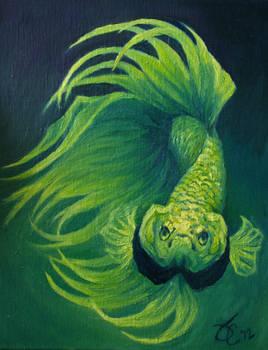 Green Envy Crowntail