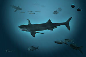 The Paleozoic shark Orestiacanthus fergusi by mixtix-freeman