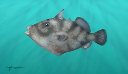 Prehistoric triggerfish Oligobalistes