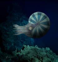 Ammonite Funiferites