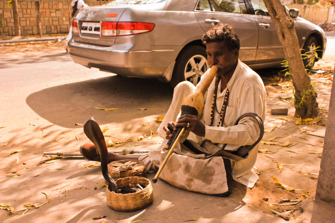 """the art of snake charming Snake charming, in fact, may be most dangerous of all to the seemingly """"charmed"""" life of the cobra """"while this crude """"training"""" is probably not particularly cruel, the treatment received by the cobras in many cases is,"""" says wolfgang wuster."""