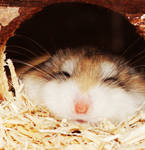 My Hamster by aznweirdo