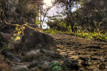 Fragility of Life : HDR