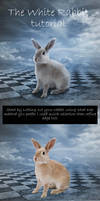 The White Rabbit Tutorial