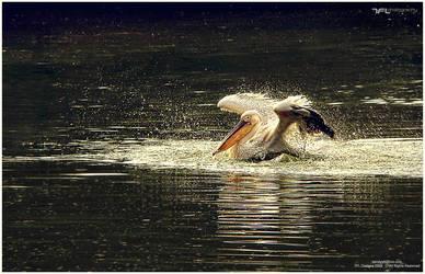 The Refreshing Landing