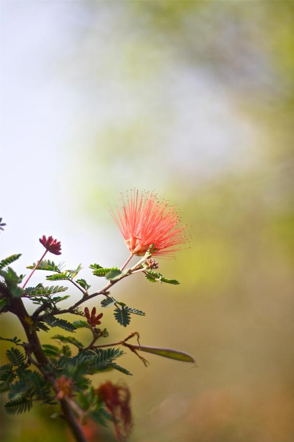 Conejo Valley Botanic Garden 5 by thzinc