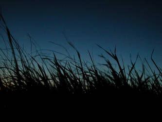 Swaying Grass by thzinc