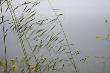 Wild Grass by thzinc