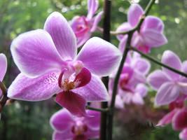 Orchids - 3