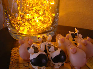 The piglets watch the shinies