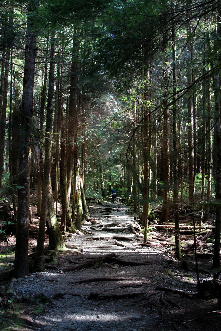 Into The Woods by dalucia