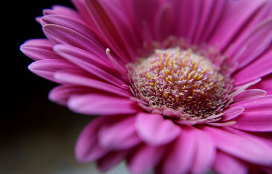Pink... by AgataSwat