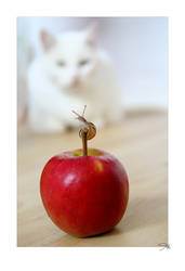 cat. watching a snail. by mefotografie