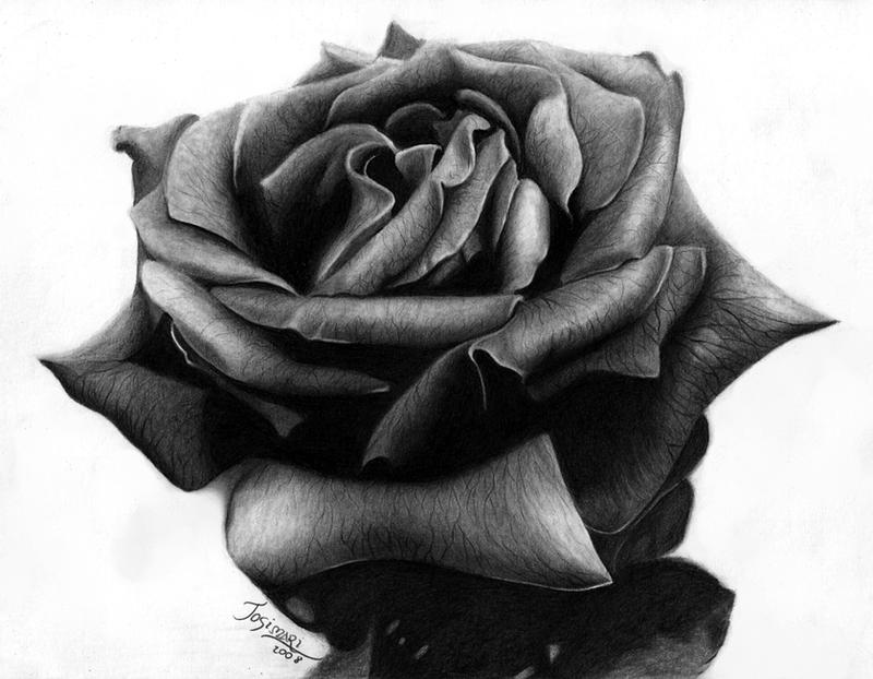 Black Rose by Esteljf