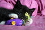 The kitten playing by llvllagic