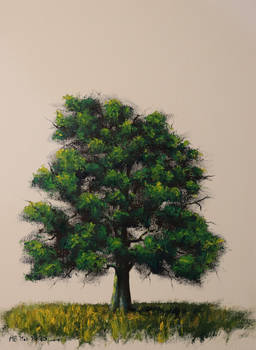 Tree - Pallet Knife