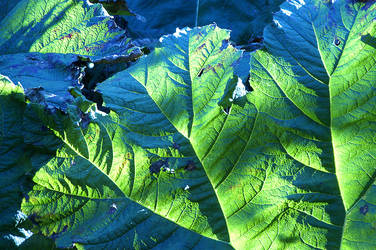 Tungsten leaves by gillc
