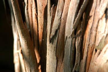 Splintered bark by gillc