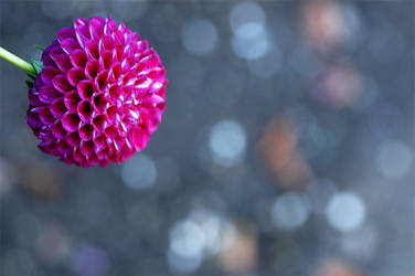 Small pink flower by gillc