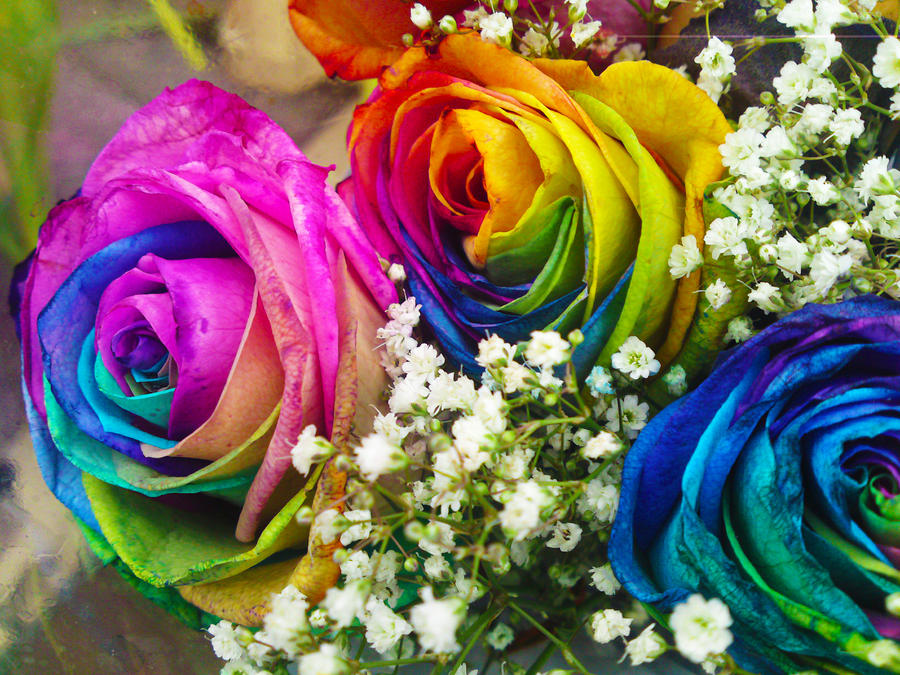 Rainbow rose 2 by funkysockzlover on deviantart for Where to find rainbow roses