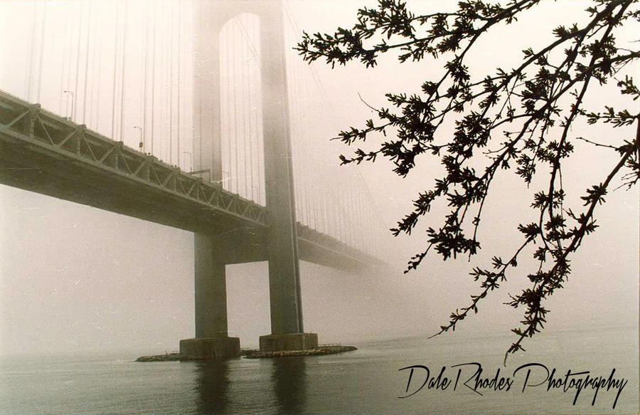 Verrazano-Narrows Bridge by DalePhotography