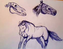 Horse stuff by bonesaw-art