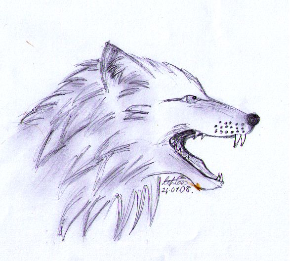 Wolf head snarling sketch by quietfawn skywolf