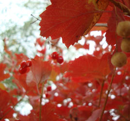 autumn wears red by TyKayn