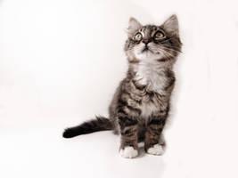 Cat Stock 001