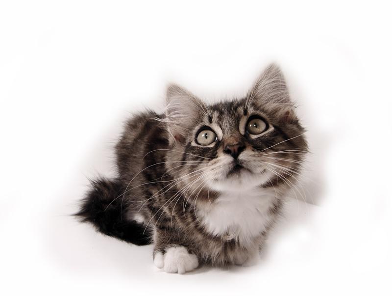 three little kittens lyrics