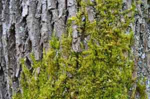 Maple Bark and Moss by PC-STOCK