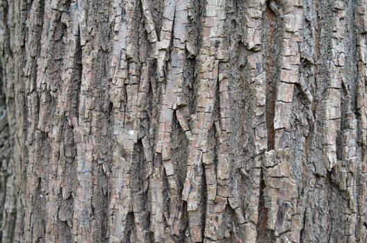 Maple Bark II