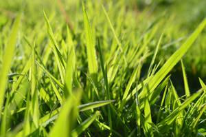 Grass I