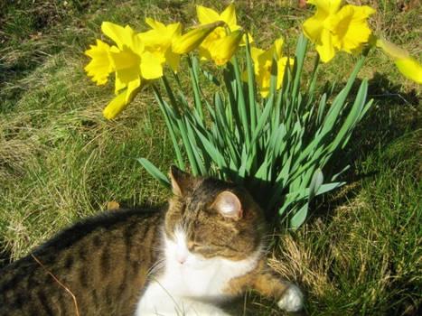 Daffodil Durga